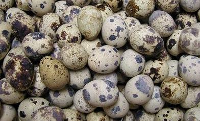 перепелиные яйца польза и вред для женщин
