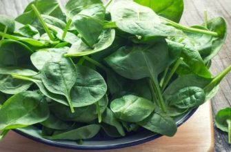 шпинат польза и вред рецепты приготовления